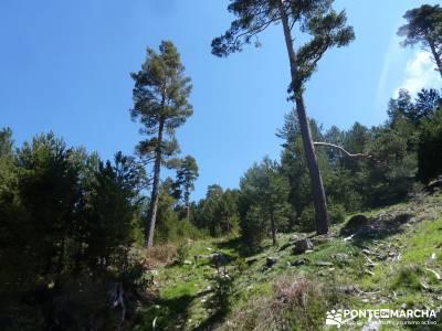 El pinar del Puerto de Navafría;el castañar del tiemblo;la charca verde;brujulas